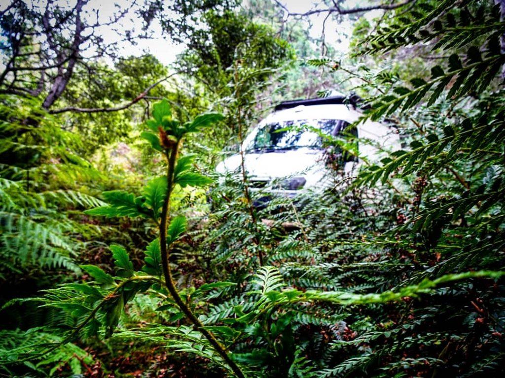 Vinny in the bush